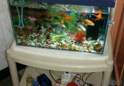 Fish Tank full equipped accessories 21 fishes, 2mths old cost ...